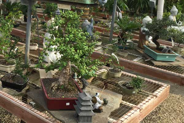 Wolf Trap Nursery - bonsai